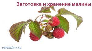 Заготовка и хранение малины